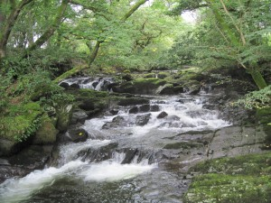 The River Sprint, Cumbria